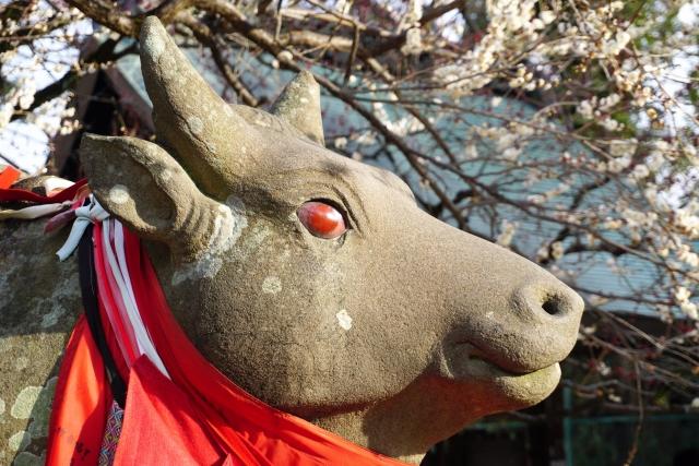 北野天満宮 赤目の撫で牛